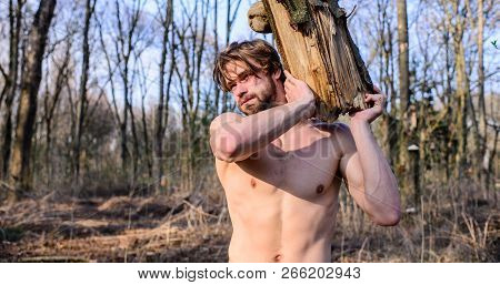 Man Brutal Strong Attractive Guy Collecting Wood In Forest. Man Brutal Sexy Lumberjack Carry Big Log