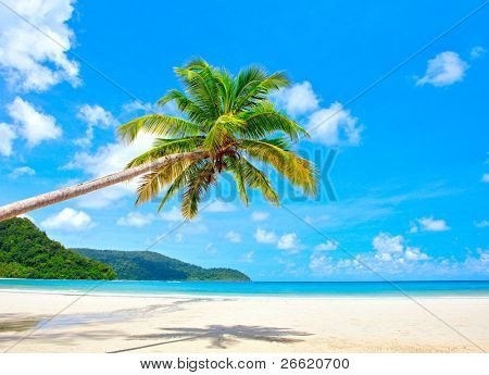 Fantastic palm tree over tropical beach in luxury resort