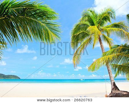 Summer nature view - palm trees on white sand and blue sea