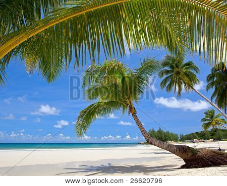 Summer beach with palm trees near the sea under blue sky. Tropical nature view.