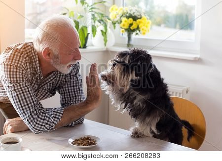 Cute Dog Giving Five With Paw To A Senior Man At Dining Table With Food In Small Plate In Front Of H
