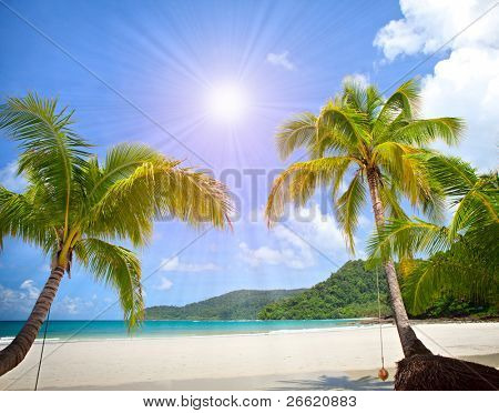 Exotic sunny beach with palm trees under blue sky near the sea. Paradise summer vacation.