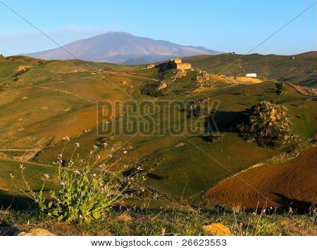 landscape for flowers of field on the background the volcano Etna