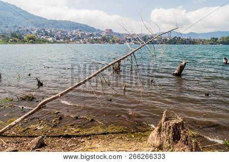 Coast Of Atitlan Lake, Guatemala. Rising Levels Of This Lake Causing Submersion Of Trees. Santiago A