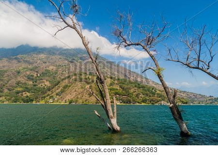 Coast Of Atitlan Lake, Guatemala. Rising Levels Of This Lake Causing Submersion Of Trees.
