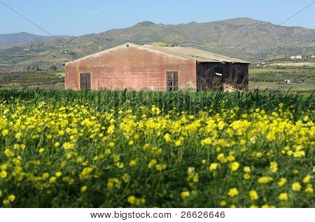 blurred yellows flower and abandoned red barn