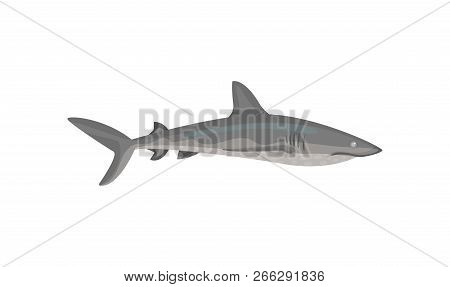 Flat vector icon of gray shark. Predatory fish with big fin on back. Marine fauna. Sea and ocean life theme poster