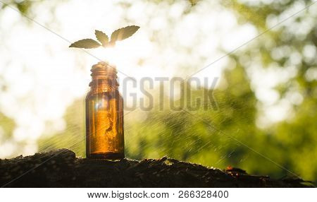 Essential Oil And A Glass Bottle On Blur Herbs Background. Ayurveda Alternative Medicine Spa Wellnes