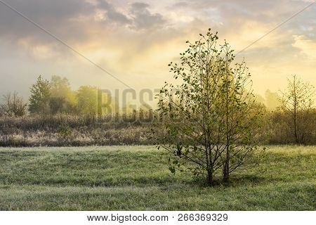 Trees On The Grassy Meadow At Sunrise. Lovely Countryside Background Of November. Foggy And Frosty W