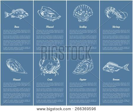 Scallop And Clam Posters Set With Headlines, Text Sample. Sea And Ocean Dwellers Bass Bream Fish, Mo
