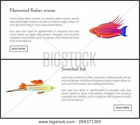 Filamented Flasher Wrasse And Swordtail Sharp Fish Web Sites Set With Headlines And Info, Tropical S