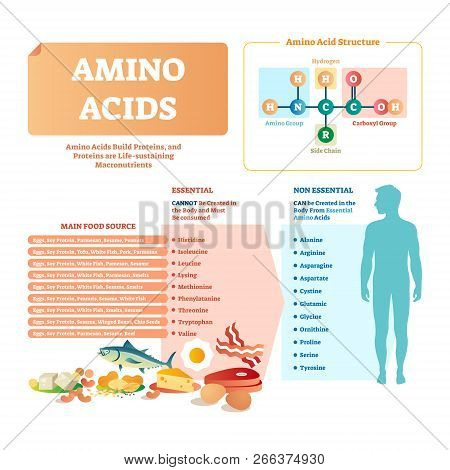 Amino Acids Vector Illustration. List With Food And Its Essential Acids. Healthy And Well Balanced N
