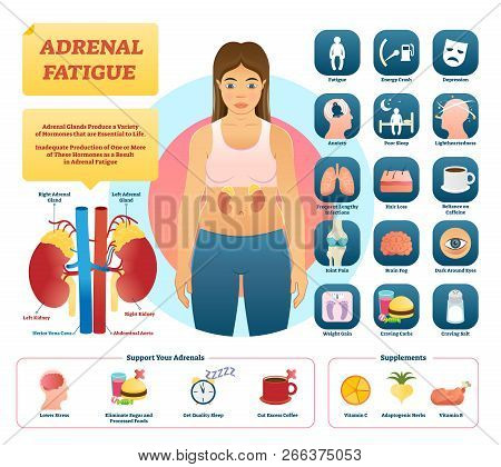 Adrenal Fatigue Vector Illustration. List Of Glands Disease Symptoms Like Fatigue, Depression, Anxie