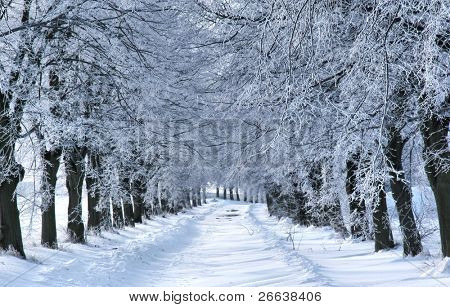 WInter tree alley