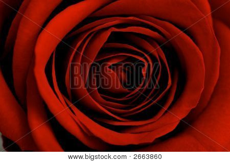 An Image Of A Red Rose Bud Close Up