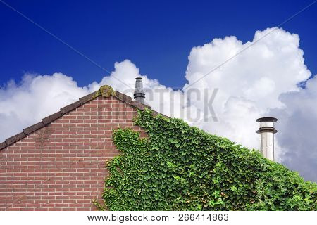 Garden Wild Grapes With Autumn Leaves On Red Brick Wall On The Blue Sky With Clouds Background. Wild