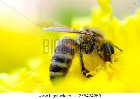 A Bee On A Yellow Flower Macro