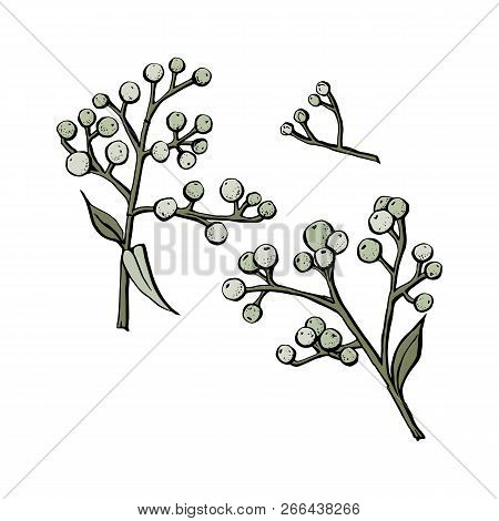 Vector Drawing Herbs, Floral Background, Hand Drawn Botanical Illustration. Vector Flower For Backgr
