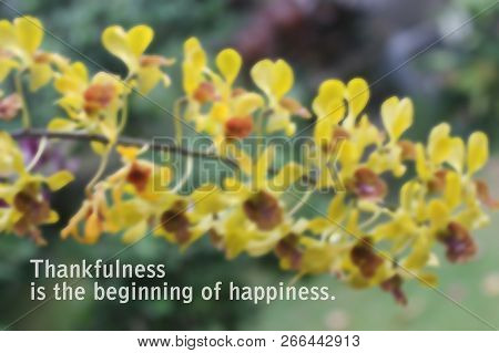 Inspirational Message Quote-thankfulness Is Beginning Of Happiness. Blurry Yellow Orchid Background