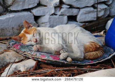 A sleeping ginger and white cat at Lakka harbour on the Greek island of Paxos.