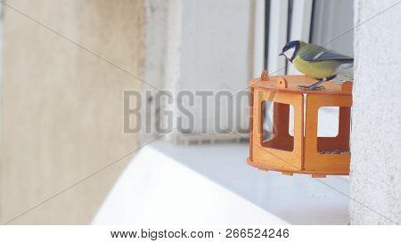 Tit Bird Parus Major Pecking Seeds In The Bird Feeder On The Window