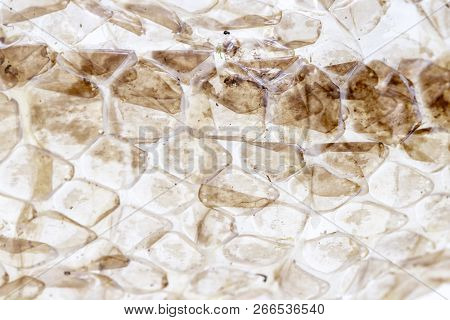 Dry skin of snake on white background, macro photo. Shedding snake skin closeup. Reptile scale pattern. Molting snake. Natural skin texture. Reptile scale surface. Animal skin peel. poster