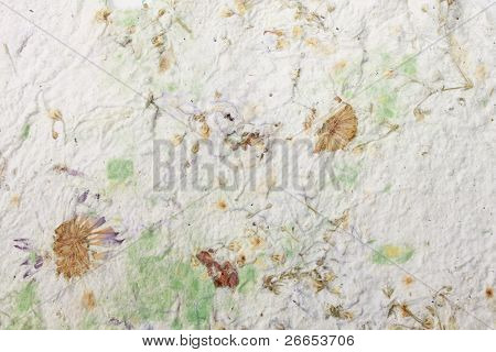 Handmade paper with dry flowers