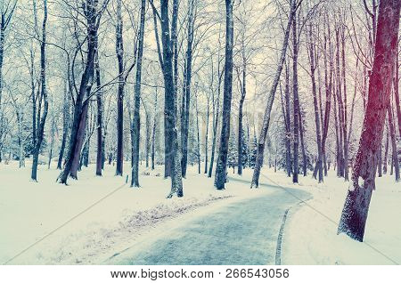 Winter cloudy landscape. Wonderland winter forest with winter forest trees covering with frost and snow. Snowy winter scene, winter trees in the park