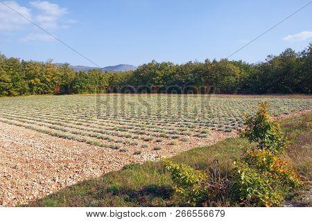 Field In Mountain Valley On Sunny Day. Bosnia And Herzegovina, Republika Srpska, Zubacko Polje. Fiel