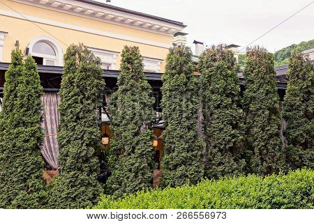 A Row Of Green Ornamental Firs Near The Wall Of A Building Outside In The Park