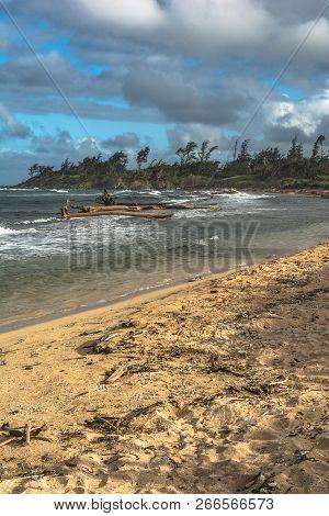 Sand Beach And Dead Trees Along The Wailua Coast, Kauai, Hawaii