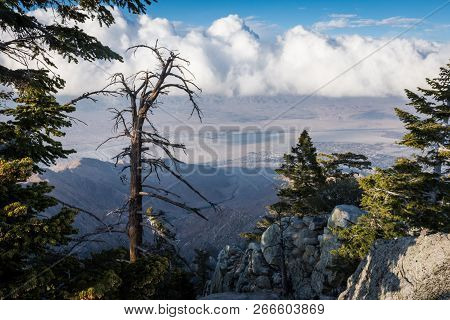 View of the Coachella Valley from the Palm Springs Aerial Tramway poster