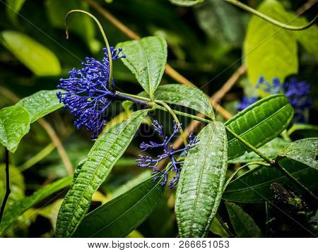 Purple flower and green leaves Spring Botany poster