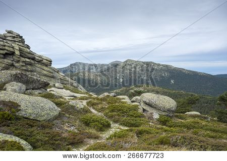 Alpine Padded Brushwood (cytisus Oromediterraneus And Juniperus Communis) In Siete Picos (seven Peak