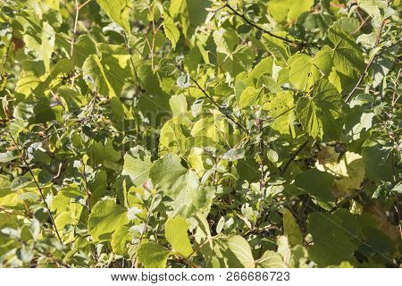 Generic Green Vegetation In A Background Composition