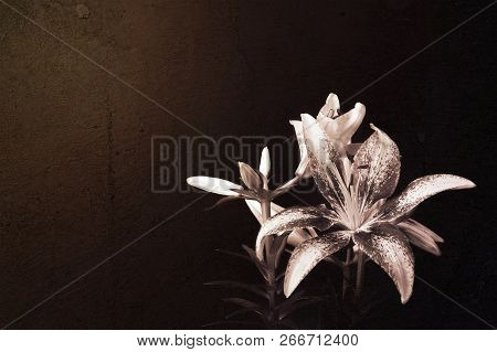 Lily Flower On Dark Grunge Background. Floral Background With Copy Space