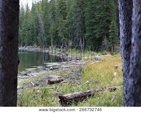 Deadwood Along The Banks Of A Clear, Mountain Lake On Top Of Grand Mesa In Colorado.