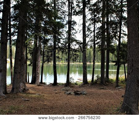 The Forest Floor Covered With Pine Needles Near This Alpine Lake Atop Grand Mesa In Colorado.