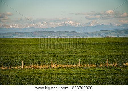 Fresh Green Of Farmland In Southern Alberta In Canada