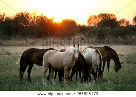 Wild Horses Of Different Colors. Country Side Of Portugal - Alentejo 2