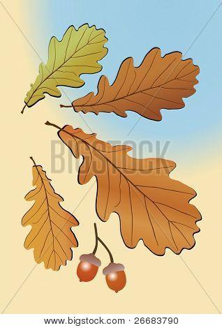 Autumn oak leaves. Vector illustration