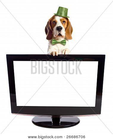 Beagle And Black Monitor