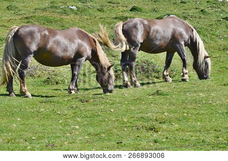 Horses In The Pasture, Mountain Dobratsch, Karawanken Alps, Austria