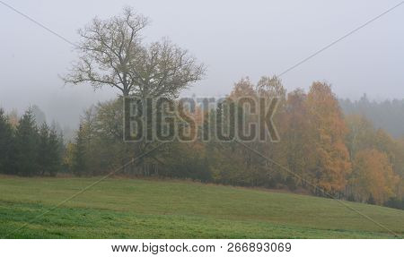 Autumn Landscape In Fog, Southern Bohemia . Czech Republic