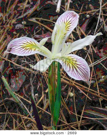 Orchid-like Wildflower