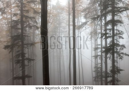 Mysterious Autumn Europian Forest With Dark Atmosfere With Fog, Czech Republic, Europe