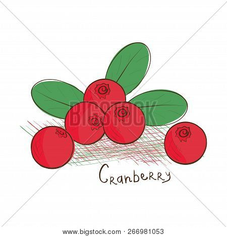Cranberry. Sketch. Doodle. Drawing On A White Background.