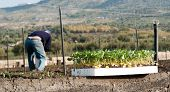 group of young plants, on background blurred farmer to work poster