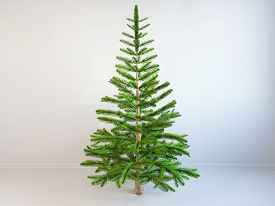 Fir Tree  Without Toys. Isolated, 3d Illustration