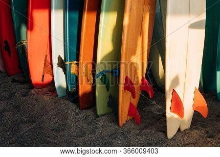 Many Fins Colorful Surfing Longboard With Surf Leash Ready For Rent. Set Of Multicolored Surf Boards